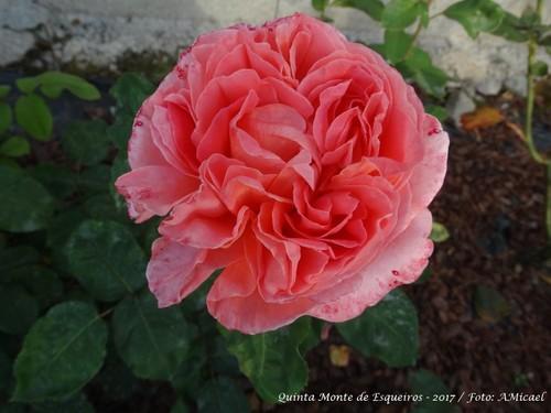 Rosas - Junho 2017 - DSC02493.jpg