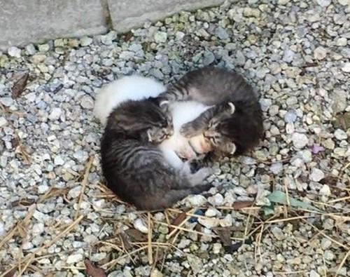 gatos2-1-760x600[1].jpg