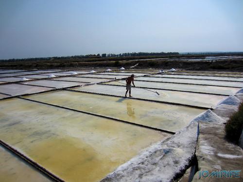 Salinas da Figueira da Foz (18) Homem a trabalhar a apanha do sal [en] Salt fields of Figueira da Foz in Portugal