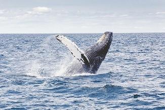 baleia-orca-12092940.jpg