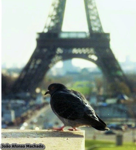 PARIS - 1998.jpg