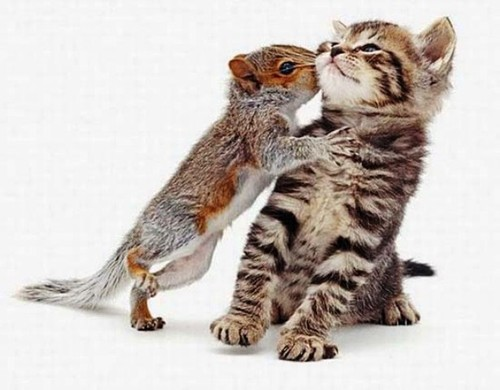 beijo gato esquilo.jpg