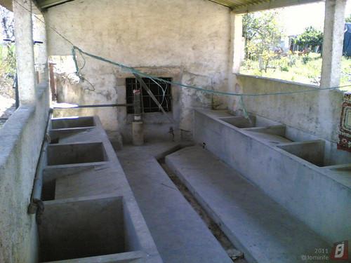 Lavadeira: Lares, Figueira da Foz