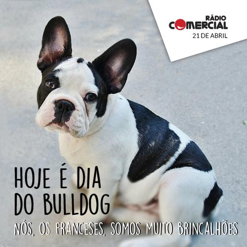 bulldog dia.png