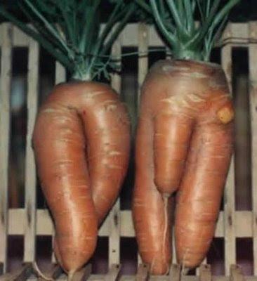 cenouras.jpg