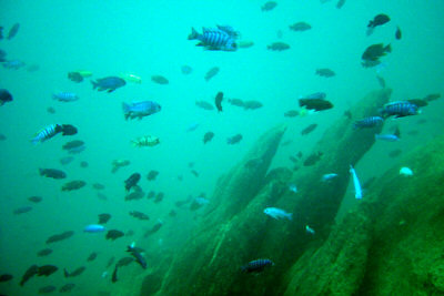 lake_malawi_fish.jpg