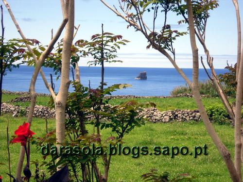 Azores_flores_faja_grande_02.JPG