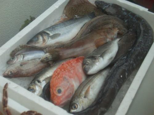 peixeiro1.jpg