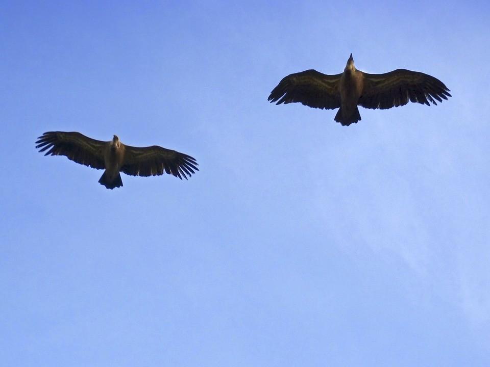 vultures-1062799_960_720 (1).jpg