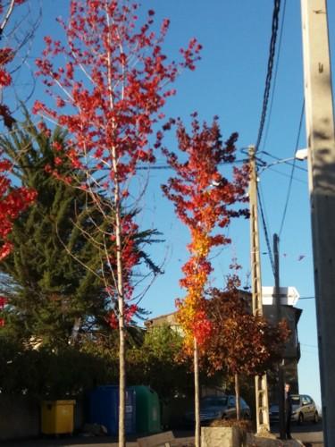foto do outono.jpg