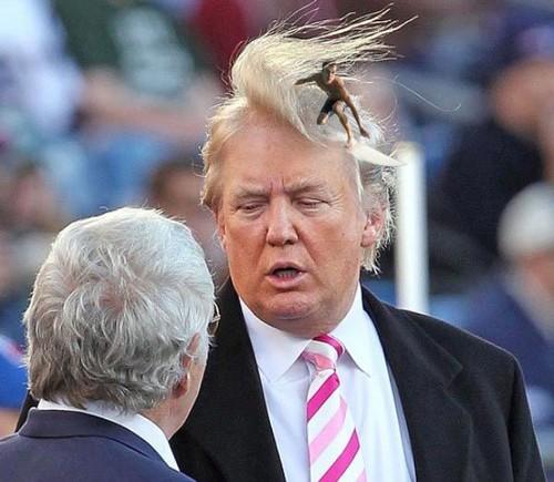 Trump_pinterest.jpg