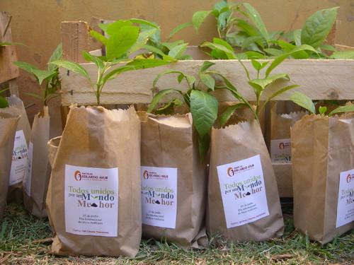 Instituto Eduardo Ayub distribui mudas de plantas nativas em homenagem ao Dia Internacional do Meio Ambiente