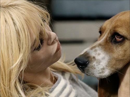 BB e cão lindo