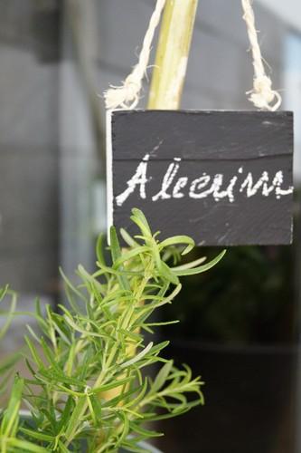 Alecrim.JPG