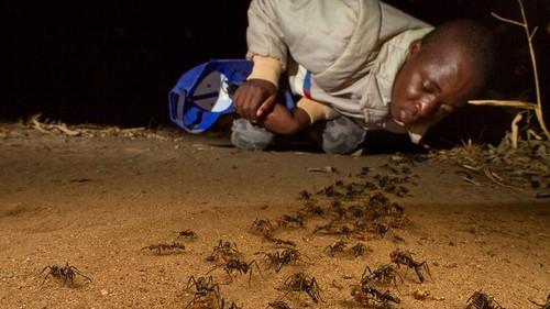 piotr_n_mozambique_2012_7016.jpg