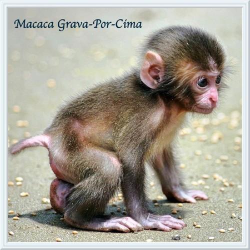 roupa-para-bebs-na-fantasia-de-macaco-g-18919-MLB2