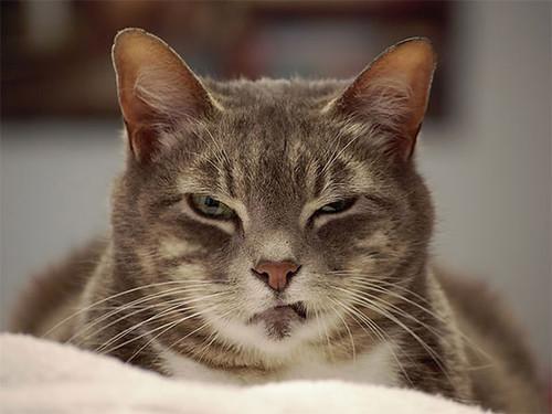 gato-mal-humorados-1.jpg
