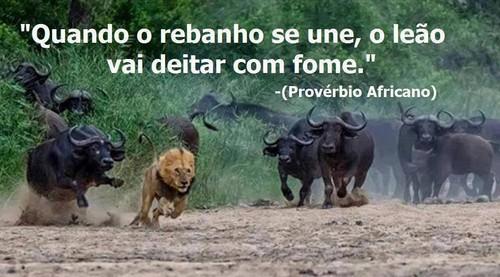 Rebanho