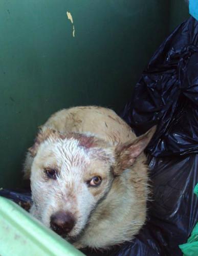 valongo do vouga cão no lixo.jpg