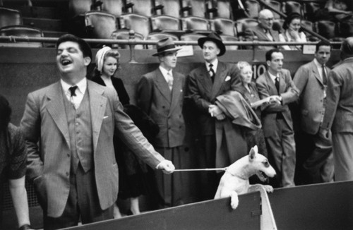Dog Show [big joke], 1941 Ruth Orkin.jpg