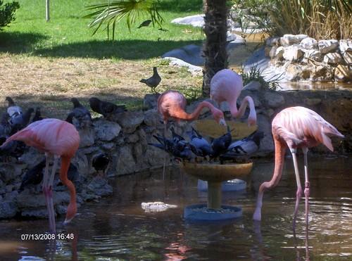 jardim zoológico 1