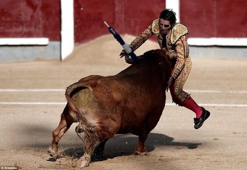 matador e touro.jpg