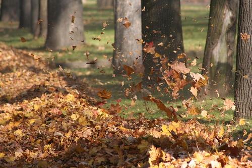 1280px-Autumn.jpg