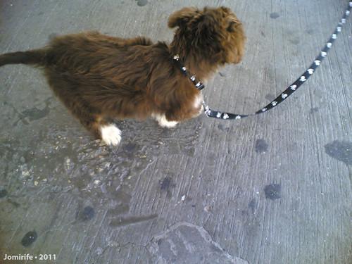 É um cão muito fofinho