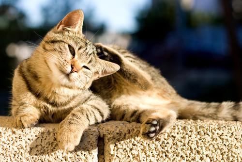 gato-com-coceira.jpg