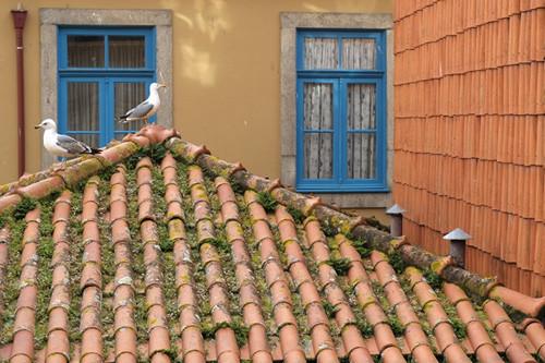 Porto2018_1_500.jpg