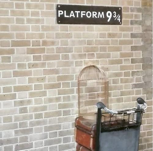 plataforma.jpg
