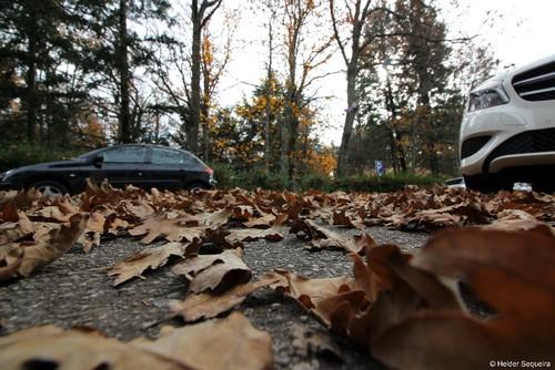 Folhas de Outono - HS.jpg