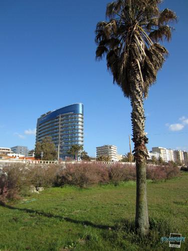 Hotel Galante: Palmeira