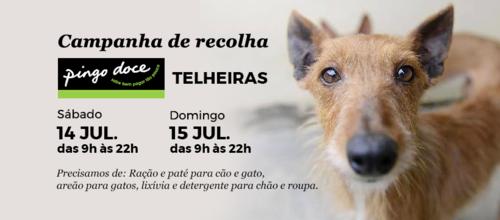 Campanha de Recolha.png