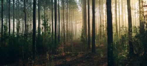 FOREST-101[1].jpg