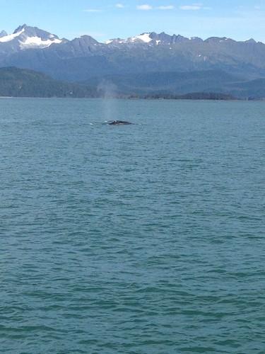 baleia 1.jpg