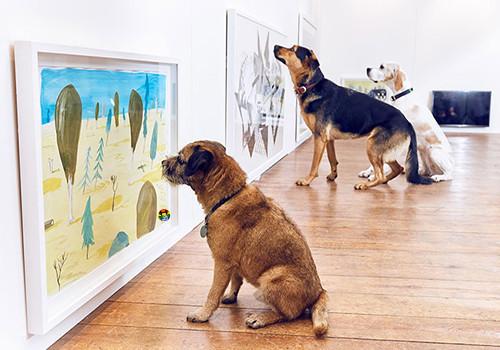 HD Exibição de arte para cães e gatos.jpg