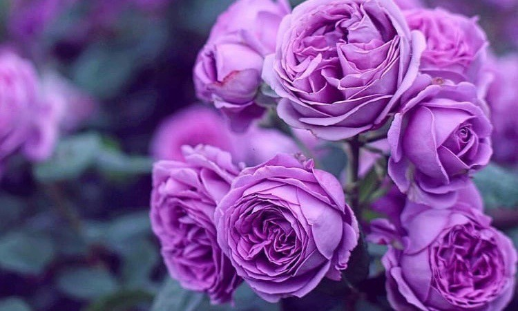 flores roxas.jpeg