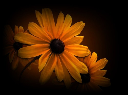 flor 4.jpg