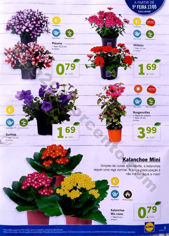 mercado plantas lidl_3.jpg