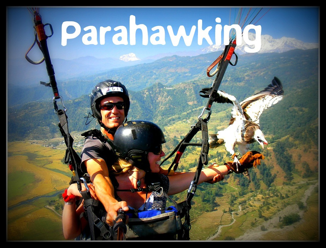 parahawking parapente falcoeiro
