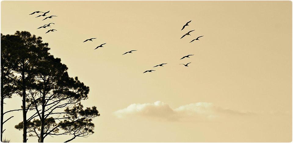 birds-1835510_960_720.jpg