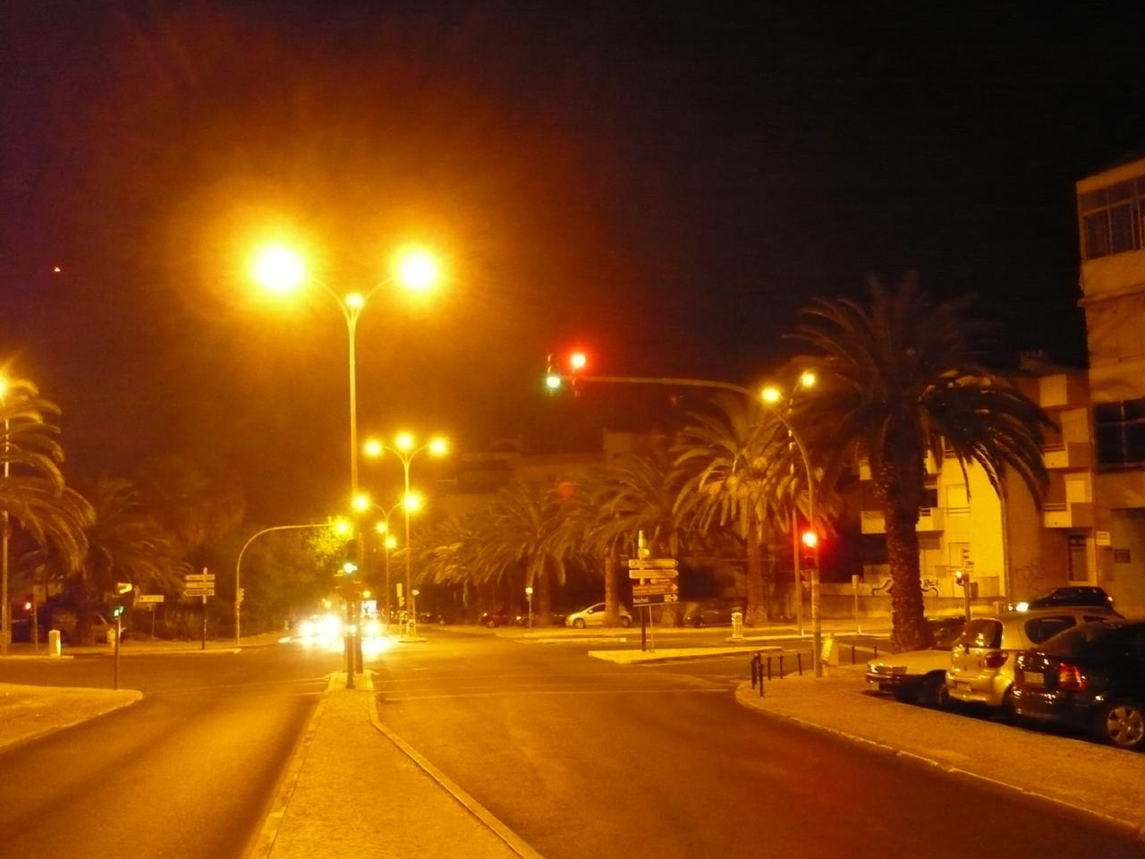 Noite com palmeiras