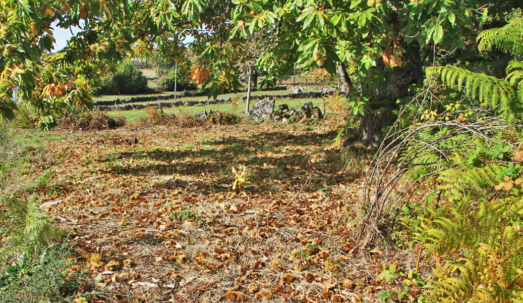 MONTALEGRE - Castanhas e cogumelos no Outono (Net