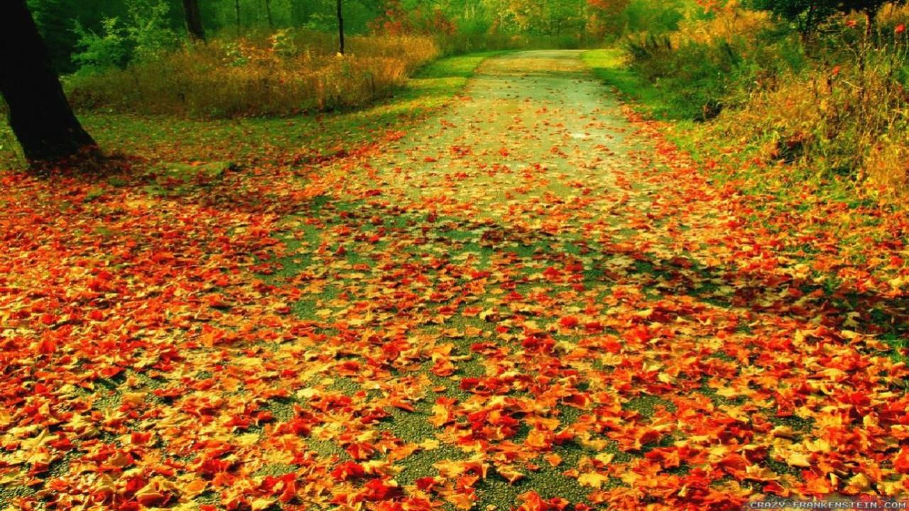 Outono1.jpg
