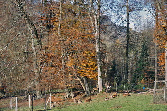wildnispark_05.jpg