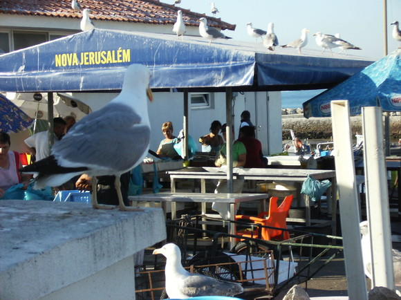 Vila Praia de Âncora - Jul2010 (122)