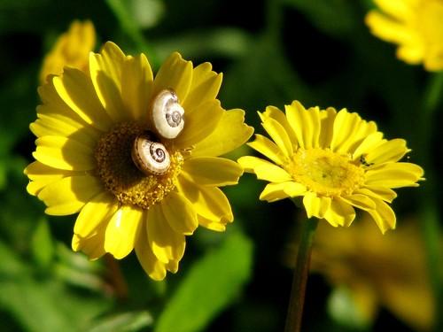 floracóis