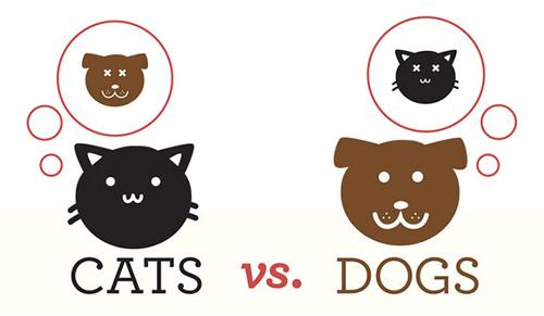 gato ou cão