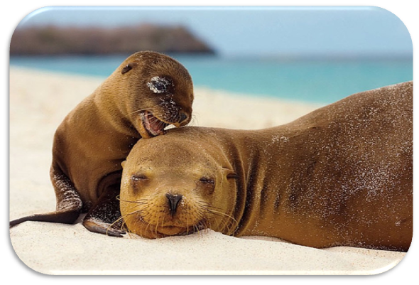 leões marinhos ilhas galápagos